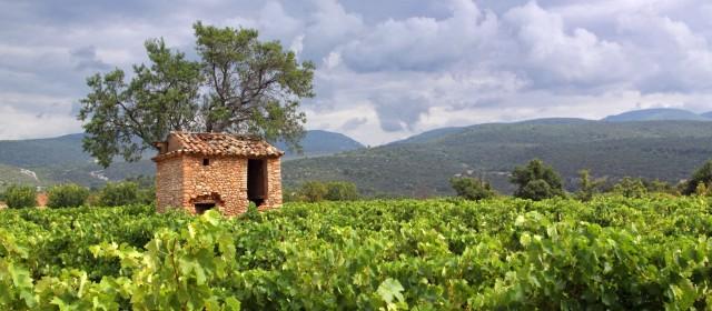 L'œnotourisme en vallée du Rhône