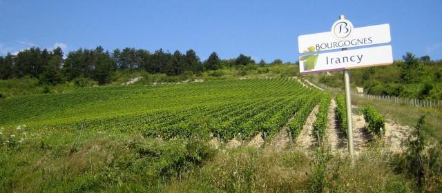 Partez pour un séjour viticole en bourgogne