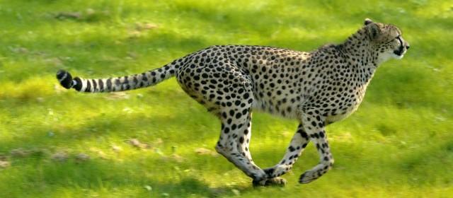 Parc zoologique de thoiry la d couverte des animaux du for Parc animaux yvelines
