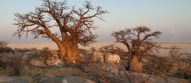 Le Botswana : le grand théâtre de la vie sauvage