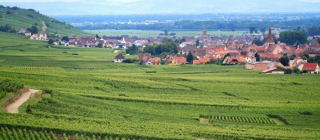 Alsace : À la découverte des fameuses routes des vins